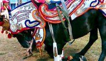KudaRenggong